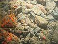 Tubulariidae WBRF CEND0313 ADDGT03 STN 118 A1 010.jpg