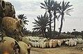 Tunis1960-137 hg.jpg
