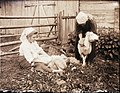 Två kvinnor klipper får - Nordiska museet - NMA.0036237.jpg
