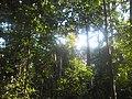 U tropskoj prašumi.jpg
