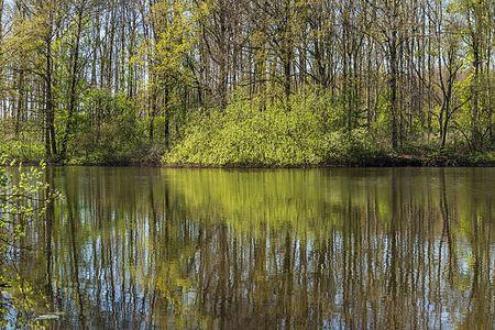 View over the Bekhofplas, Beekdal Linde Bekhofplas nature preserve, Netherlands