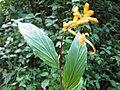 Unidentified Plants - പേരറിയുമോ - 2012-08-20.jpg