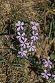 Unidentified plants in France 01.jpg