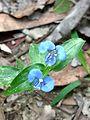 Unknown flower of bd 11.jpg