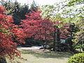 Urakuen tea garden 03.jpg