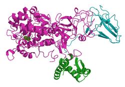 Urease (Klebsiella aerogenes)