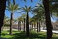 VIEW , ®'s - DiDi - RM - Ð 6K - ┼ , MADRID PARQUE de PEÑUELAS JARDÍN - panoramio (162).jpg