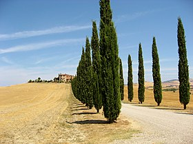 Image illustrative de l'article Val d'Orcia