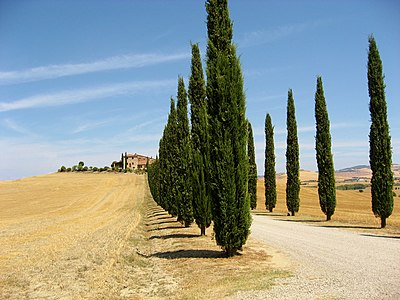 Val d'Orcia, Tuscany, Italy: Countryside road lined with cypress trees in the summer months.