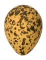 Vanellus spinosus MHNT - cutout.png