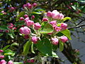 Vargata-Csikfalva - spring flowers - panoramio - jeffwarder (4).jpg