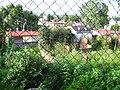Vegetación exhuberante - panoramio.jpg
