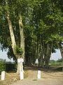 Verdun sur garonne platanes.jpg