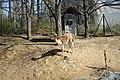 Vicuña @ Parc Zoologique de Paris (Zoo) @ Paris (25741108934).jpg