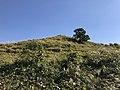 View near Aso Farm Land 10.jpg