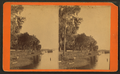 View of cattle on the river bank, from Robert N. Dennis collection of stereoscopic views.png