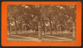 View of the park and fountain from Rose St, by Baldwin, Schuyler C. (Schuyler Colfax), 1823-1900.png