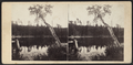 View on the South Lake, Catskill Mountain, by E. & H.T. Anthony (Firm) 3.png