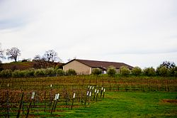 Vineyard in Amador Valley.jpg