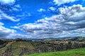 Vineyards in chianti fiorentino.jpg