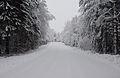 Vinterväg Vena.JPG