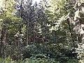 Wald am Gubrist.jpg