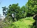 Waldreservat Plontabuora1.jpg