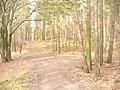 Waldweg - Heiligensee - geo.hlipp.de - 32736.jpg