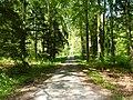 Waldweg im Kohlhau bei Magstadt - geo.hlipp.de - 10437.jpg