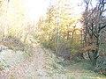 Waldweg im Naturschutzgebiet Mittleres Ourtal - geo.hlipp.de - 6804.jpg