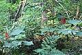 Wapta Falls Trail IMG 4942.JPG