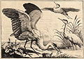 Wenceslas Hollar - Three herons (State 1).jpg