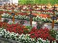 Westfriedhof Innsbruck Barmherzige Schwestern 1.jpg
