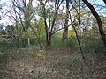 Wild Meadows Trace-Prairie Path, Elmhurst, IL - panoramio (4).jpg