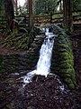 Wildwood Park, Puyallup, WA. — 01.jpg