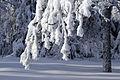 Winter details (8441600857).jpg