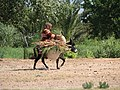 Woman on donkey-between Skoura and Ouarzazate-inpadgham-01.jpg