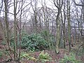 Woodland, Dalgety Bay - geograph.org.uk - 1078331.jpg