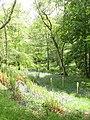 Woodland, Dungarthill - geograph.org.uk - 440239.jpg