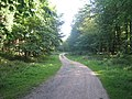 Woodland track in King's Wood - geograph.org.uk - 1456033.jpg