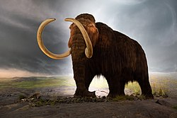 Woolly mammoth model Royal BC Museum in Victoria.jpg