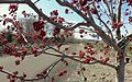 Yakima Greenway - panoramio (43).jpg