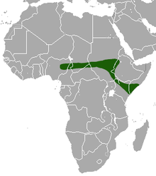 Yankari Shrew area.png