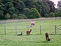 Yes, it's a Camel - geograph.org.uk - 511851.jpg