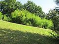 ZOO Ústí n L - bambusy.jpg