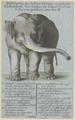 Zentralbibliothek Zürich - Abbildung des betrachtungswürdigen Elefanten wie solcher im Jahr 1773 in der Schweiz gesehen worden ist - 000004891.tif