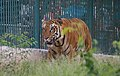 Zoo of Ahmedabad, India (4052626928).jpg