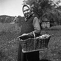 """""""Koš?k, kaš?k"""" (košek) za krompir in razno iskat - pri Kovaču, Male Lašče 1960.jpg"""