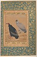 """Red-Headed Vulture and Long-Billed Vulture"", Folio from the Shah Jahan Album MET DP245154.jpg"