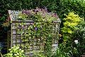 'Clematis viticella' Étoile Violette trellis at Nuthurst, West Sussex, England.jpg